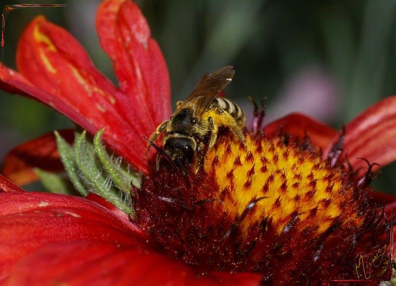 Nature sauvage abeille