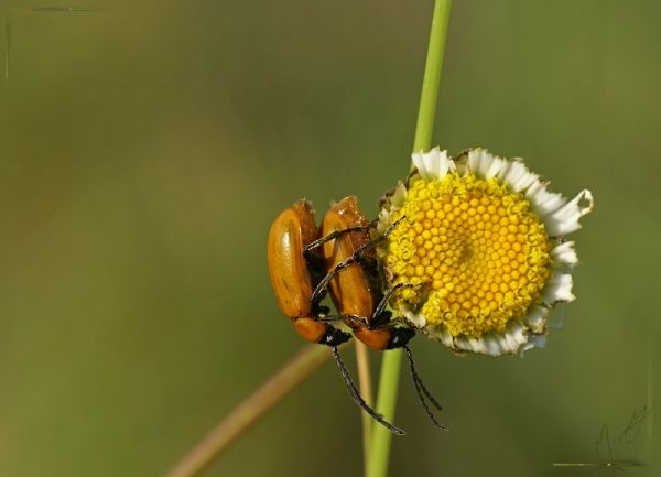 Nature sauvage insecte