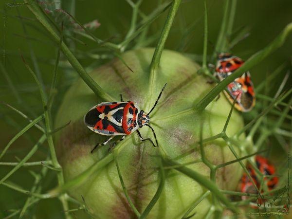 Nature sauvage insecte punaise