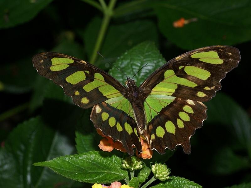 Nature papillon exotique