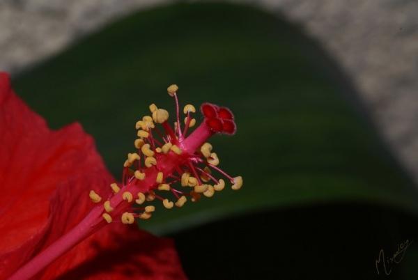 Flower fleur hibiscus