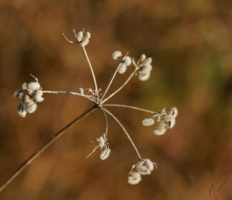 Flower fleur nature sauvage