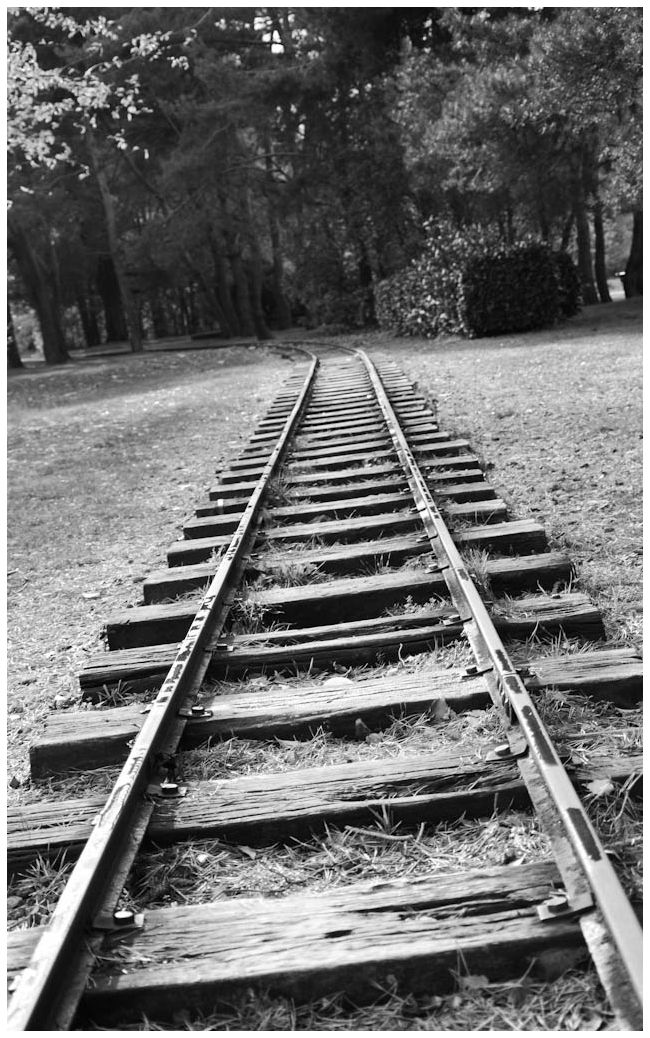 Old train tracks going in the woods...