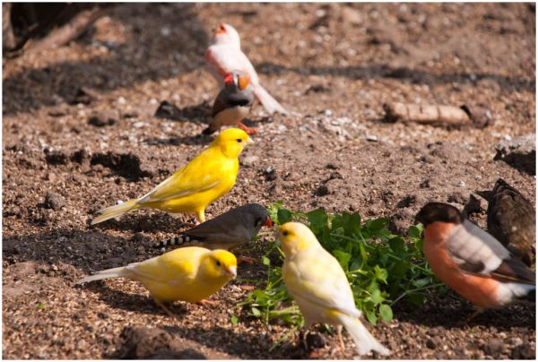 Birds lunching
