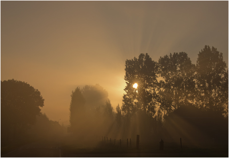 Foggy morning - 3