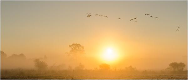 Morning mist - 2