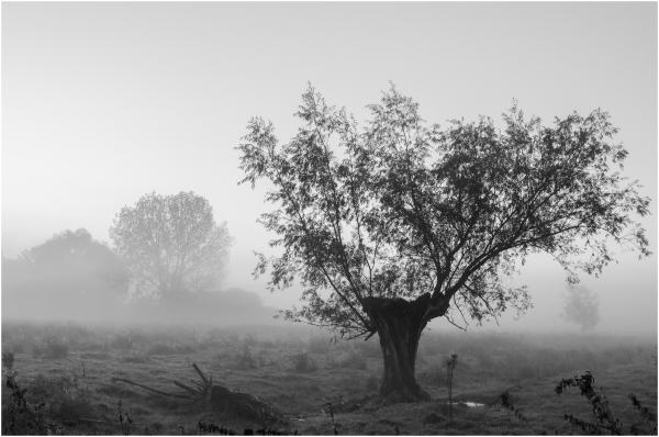 Morning mist - 3