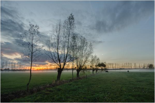Field view - 2