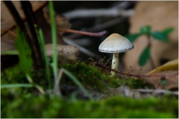 Mushroom - 3