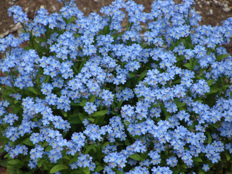 """Blue """"Sky"""" of Spring"""