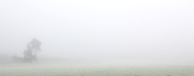 Dans le brouillard...
