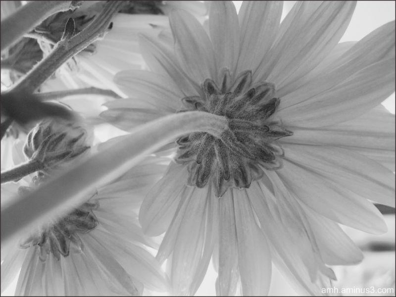 El otro lado de la flor