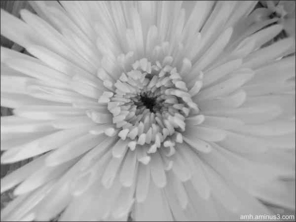 Otra flor