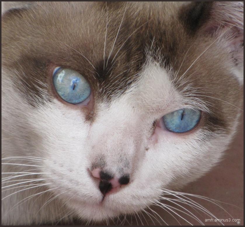 Ojos celestes