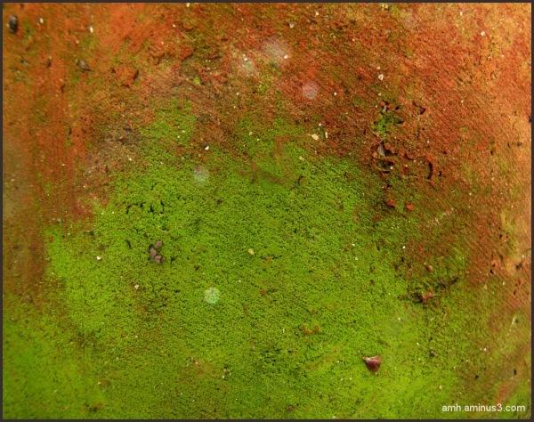 Terracota y verde