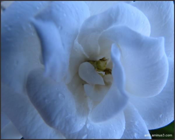 Una flor azul
