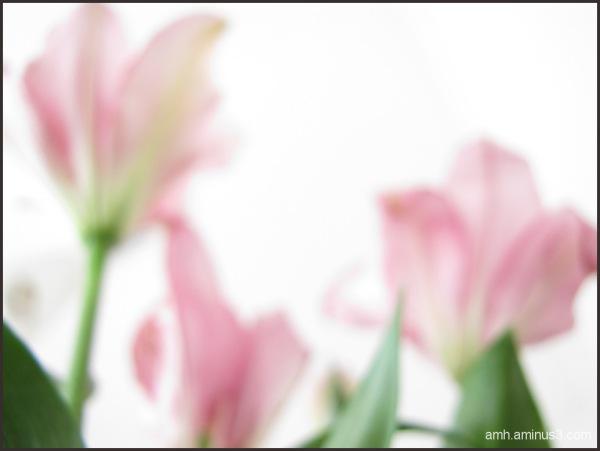 Flores tras vidrios