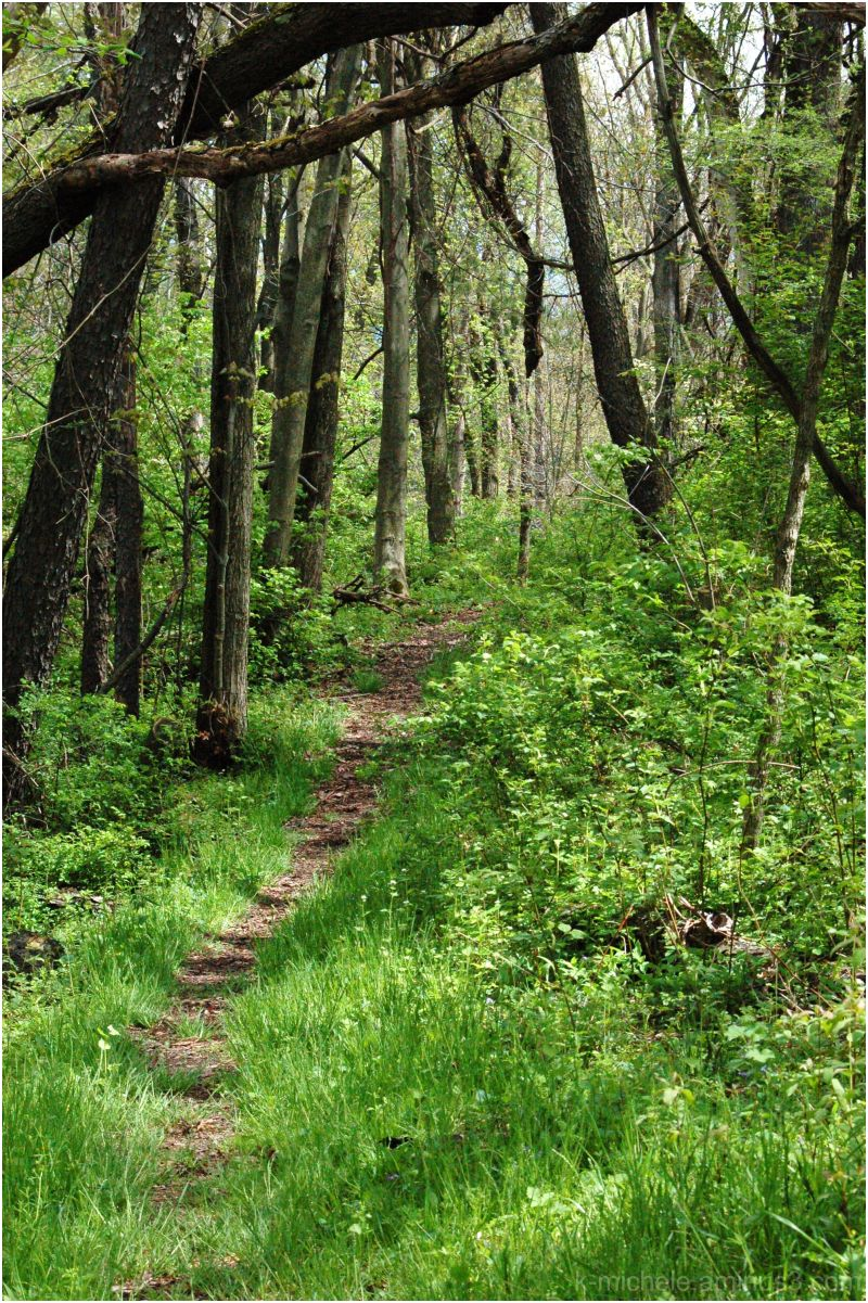 path at ohio bird sanctuary