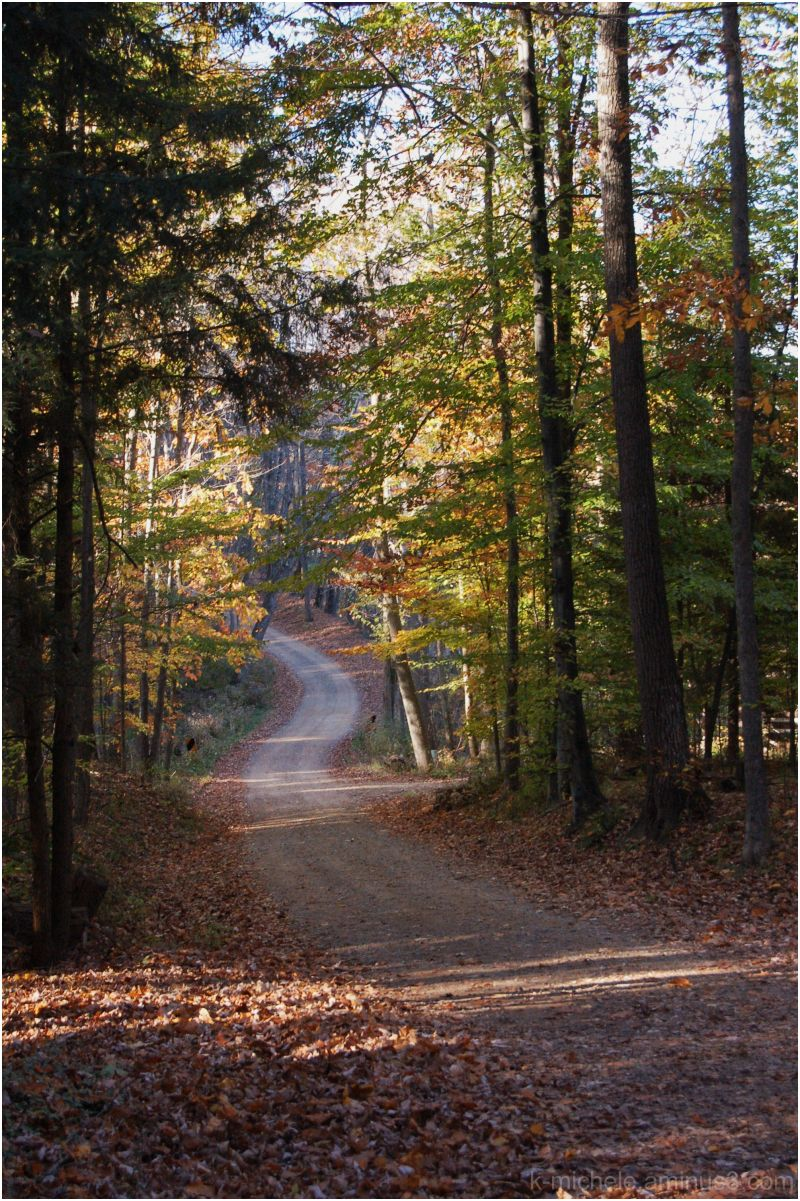 road to pugh cabin