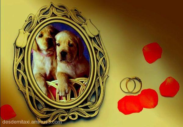 perros pareja en armonia