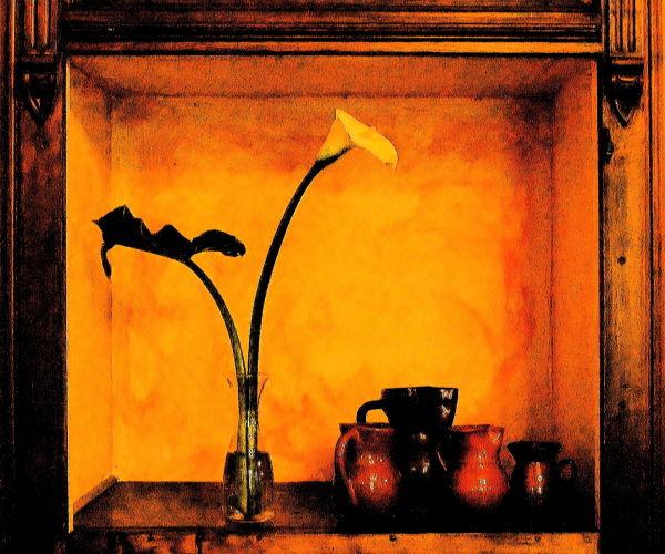 still life with calla lily, palma di mallorca