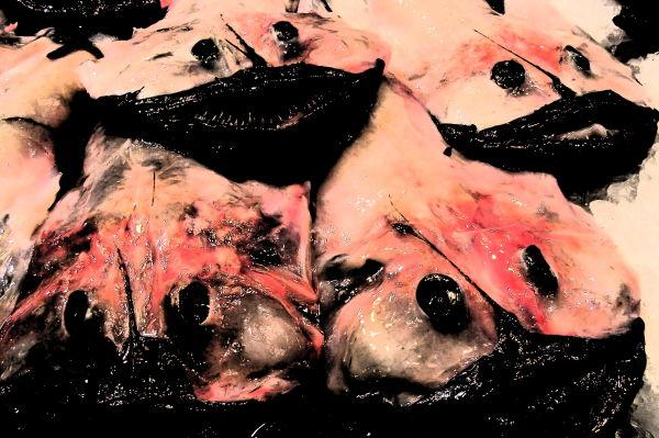monkfish at mercado del olivar, palma di mallorca
