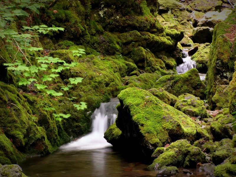 mossy banks of a waterfall creek