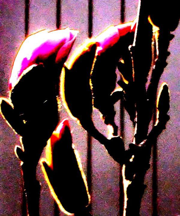 experimental magnolia buds