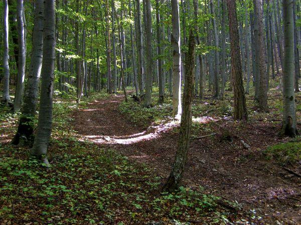hiking through the woods near baden