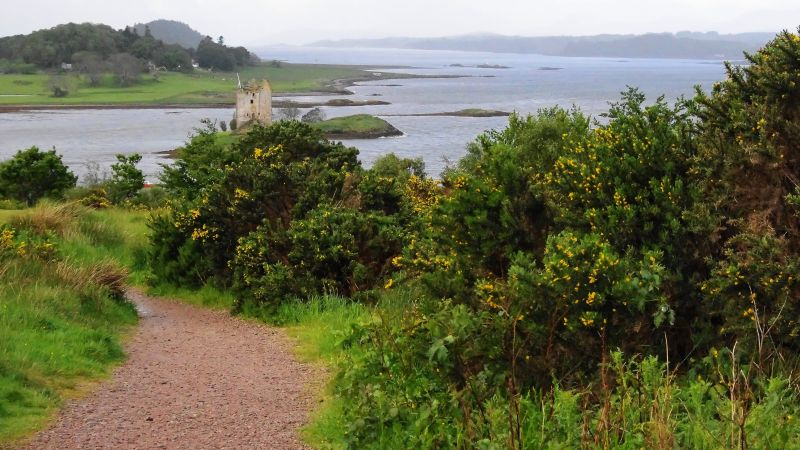 castle stalker in loch linnhe with flowering gorse