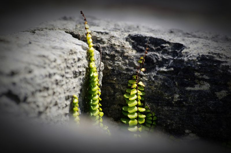new life from old stones