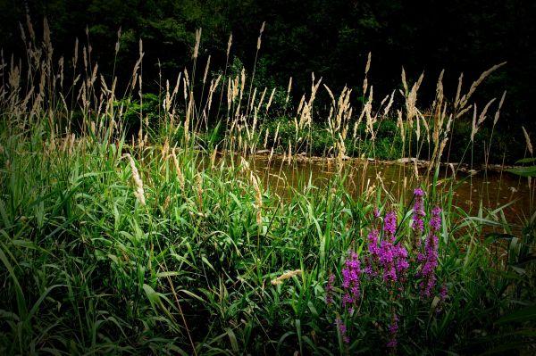 summer flowers schwechat