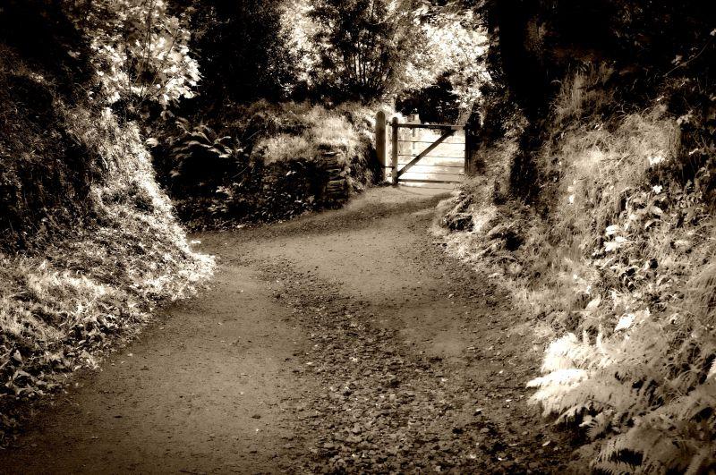 """""""sunken lane"""", heligan gardens, cornwall (chalky)"""