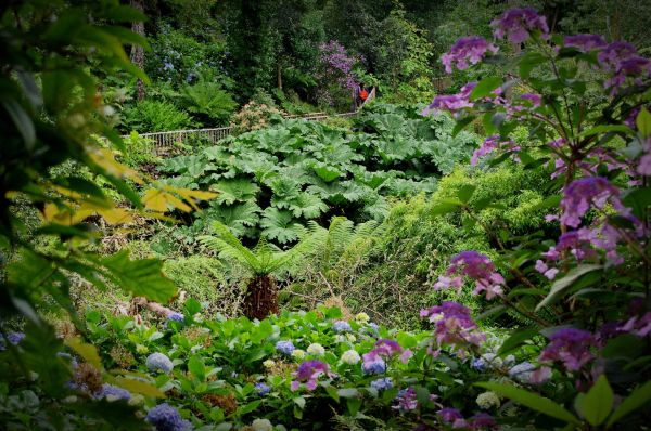 the jungle, heligan gardens, cornwall