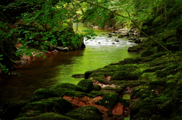 brecon beacons brook in a green tunnel, wales