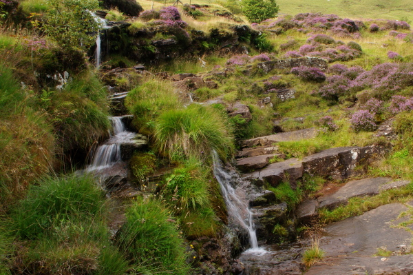 tiny cascade amidst heather, brecon beacons, wales