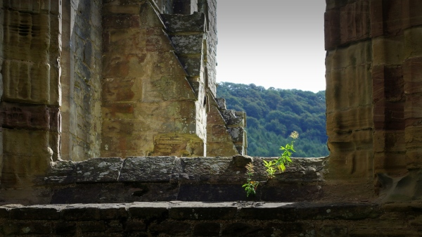 plant in window, tintern abbey, wales