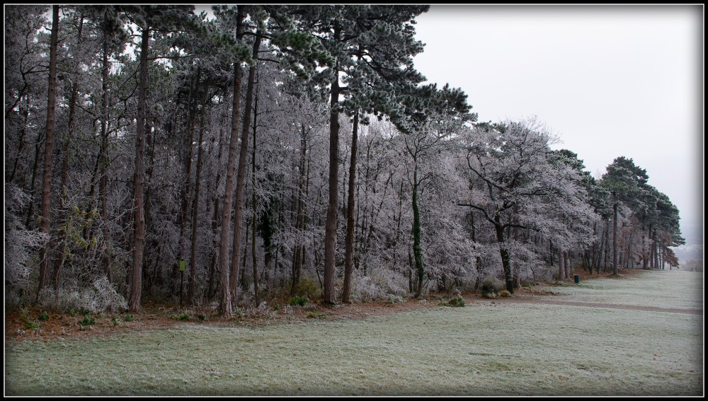 hoar frost in the kurpark