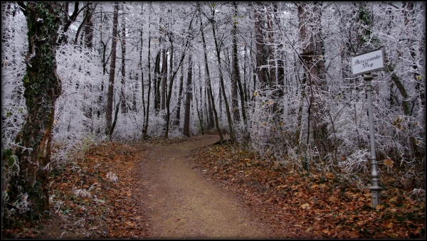 kurpark - hiking path through the hoar frost