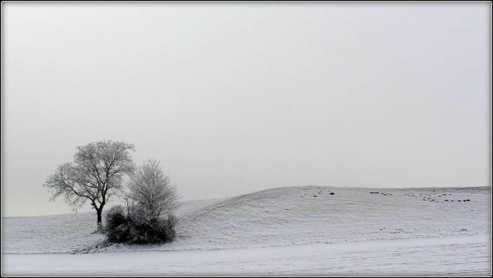 frost-covered trees in a field