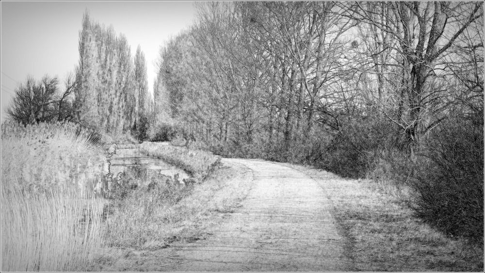 b&w view of the canal and some poplar trees