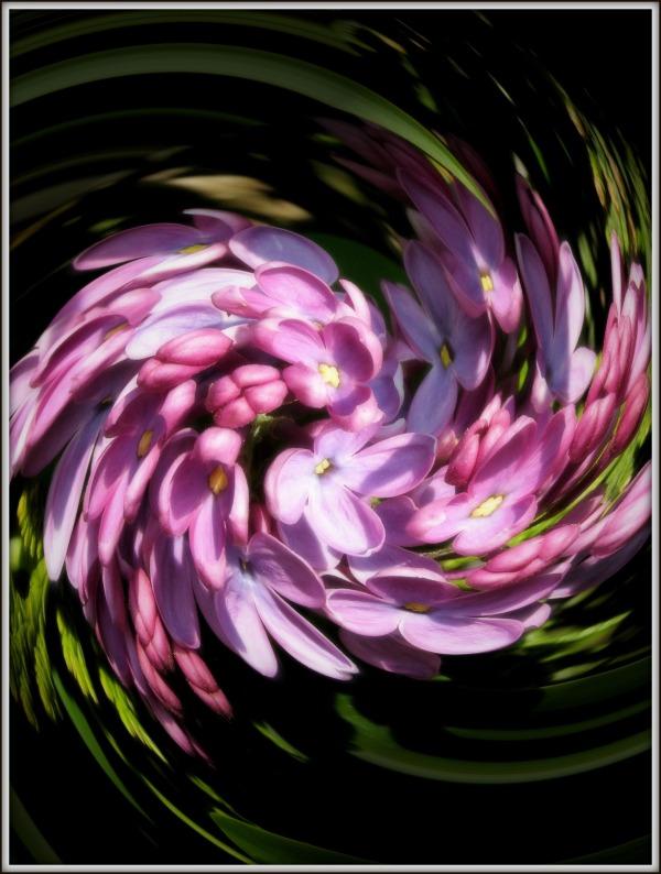 distorted lilac vortex