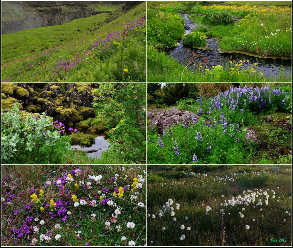 iceland, summer, flowers, collage