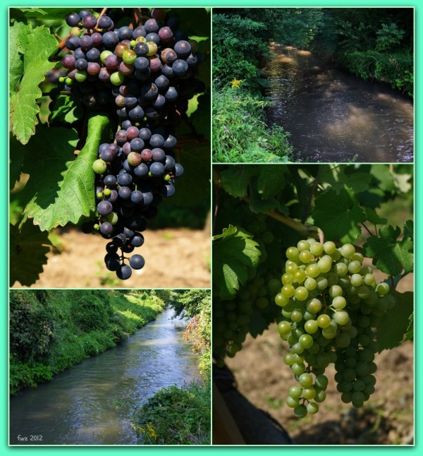 canal project 34, summer, vegetation, grapes