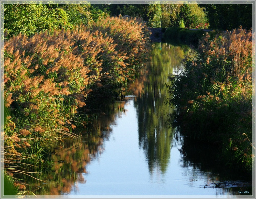 canal project 38, autumn light, reflections, reeds