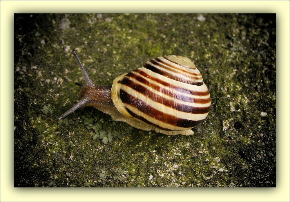 summer, snail