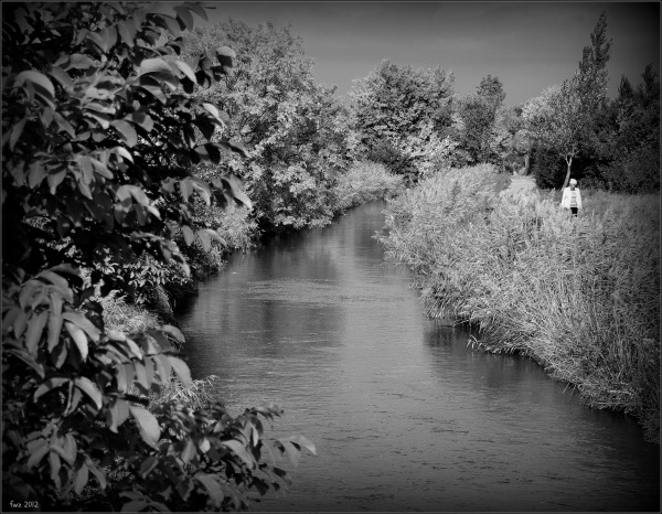 canal project 48a, autumn, leaves and reeds, bw