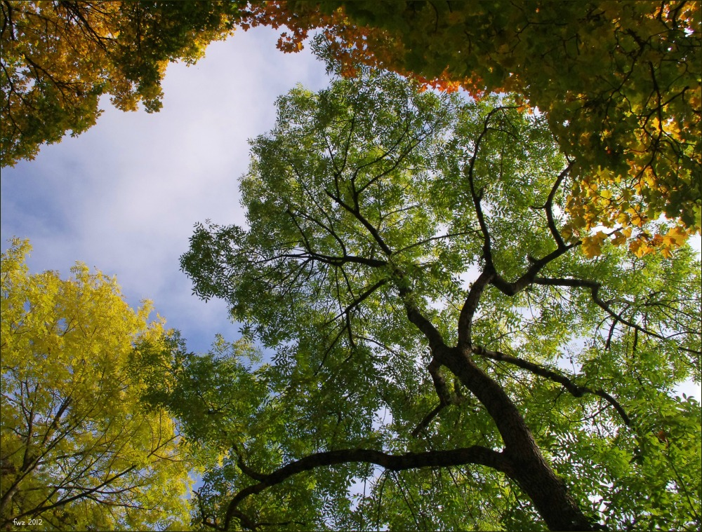 baden, kurpark, autumn, trees, leaves