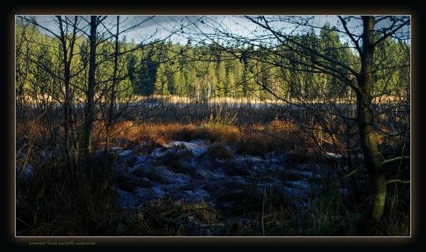 waldviertel, karlstift, forest, meadow, frost