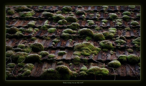 waldviertel, großpertholz, roof, tiles, moss